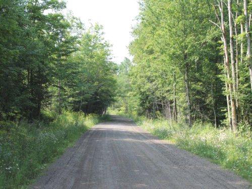56 Acres Hunting Land & Timberland : Salisbury : Herkimer County : New York