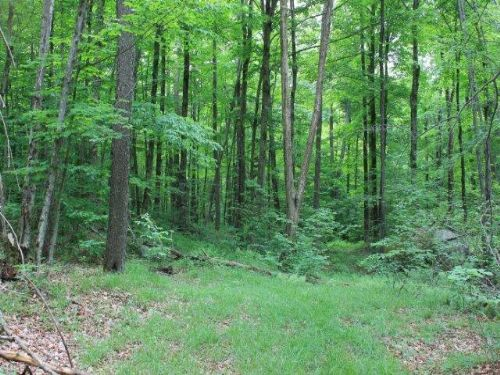 7 Acres Bordering State Forest : Diana : Lewis County : New York