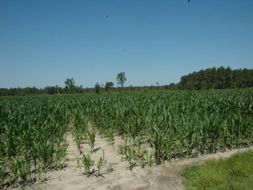 Good Farm And Timberland Investment : St. Pauls : Robeson County : North Carolina