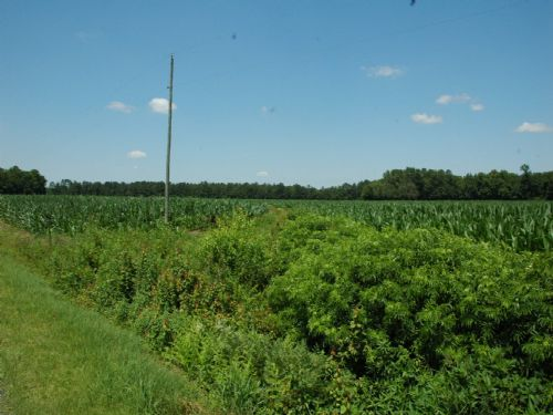 Very Nice Small Farm : St. Pauls : Robeson County : North Carolina