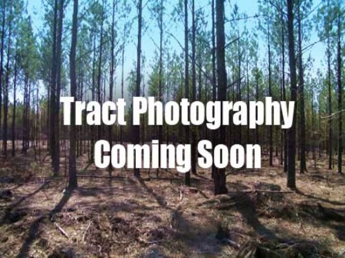 67 Acres On Mount Olive Church Rd. : Fairmount : Gordon County : Georgia