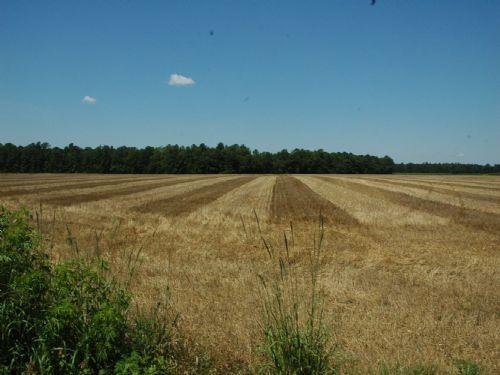 Farm And Timberland On Hwy. 301 : Saint Pauls : Robeson County : North Carolina