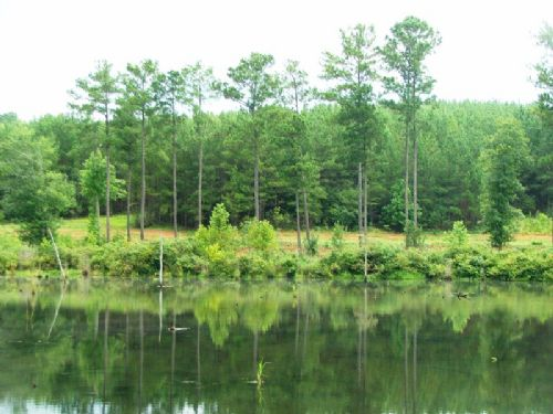 Camp Grist Tract- 280 Acres : Selma : Dallas County : Alabama