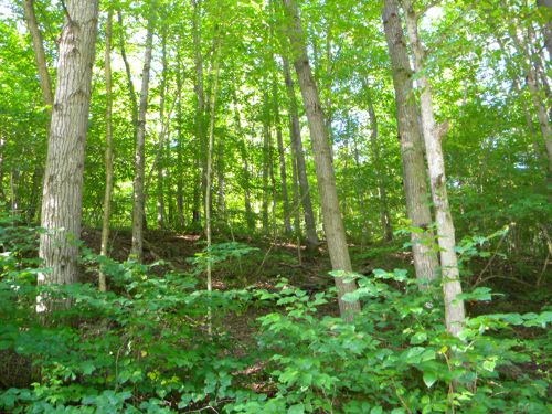 25 Acres Bordering State Forest : Harford : Cortland County : New York