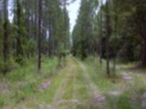 A-388 - Quality Timberland : Melrose : Alachua County : Florida