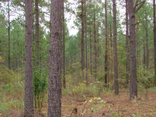 638 Acre Timber And Hunting : Buena Vista : Marion County : Georgia