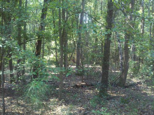 Jones Creek Tract : Ludowicic : Long County : Georgia