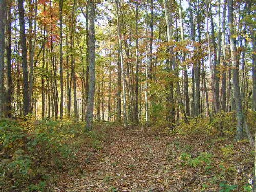 Woods, 6.2 Acres, Owner Finance : Dunlap : Sequatchie County : Tennessee