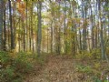 Woods, 6.2 Acres, Frontage, Woods : Dunlap : Sequatchie County : Tennessee