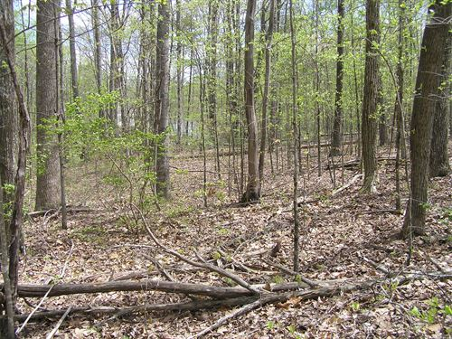 Woods, 6.19 Acres, Homesite : Dunlap : Sequatchie County : Tennessee