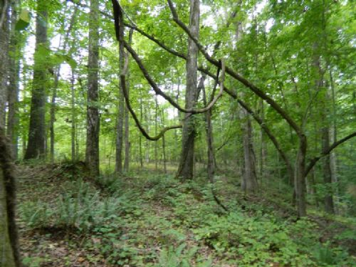 3.67 Acre Wood Lot With Creek : Lexington : Oglethorpe County : Georgia