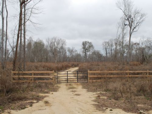 385 Acres On Altamaha River : Jesup : Wayne County : Georgia