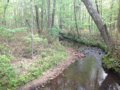 88+/- Acres Timberland Near Ga Line : Roanoke : Randolph County : Alabama