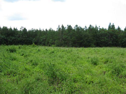 107 Acres : Mclain : Greene County : Mississippi