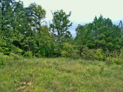 27.21 Acres For Homesite Or Hunting : Gaffney : Cherokee County : South Carolina