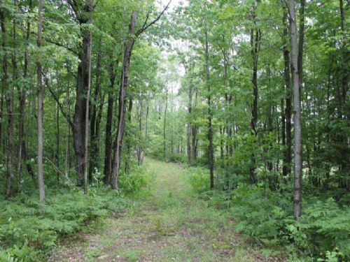 61 Acres Bordering State Forest : Florence : Oneida County : New York