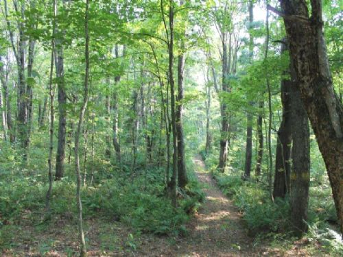 51 Acres Borders State Land Hunting : Montague : Lewis County : New York