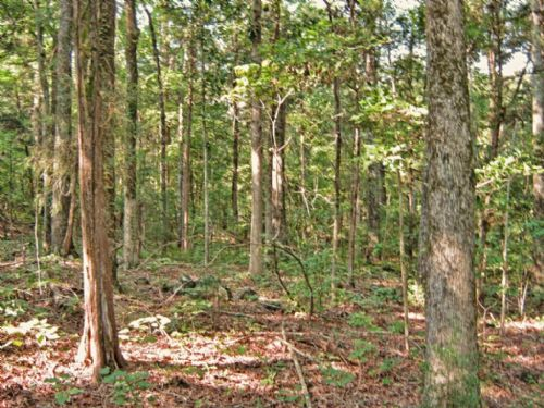 10 Acre Wooded Homesite : Mcconnells : York County : South Carolina