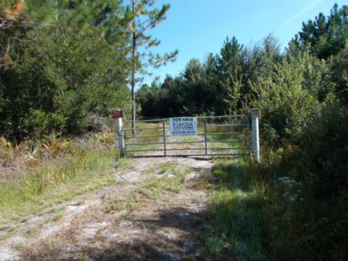 47.5 +/- Acres, Great Hunting : Jesup : Wayne County : Georgia