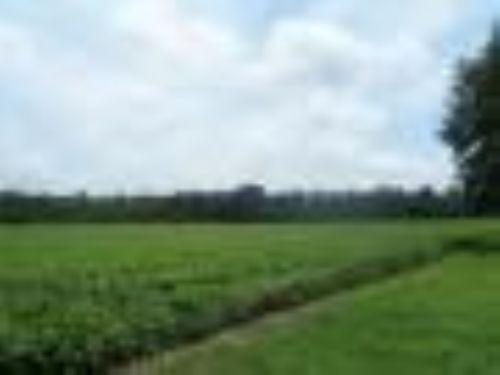 328 Acres : Carthage : Yazoo County : Mississippi