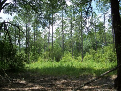 112 (+-) Acres Timberland : Sylvester : Worth County : Georgia