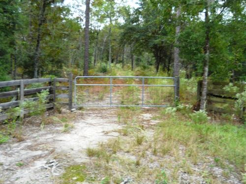 Old Florida Woods : Bell : Gilchrist County : Florida