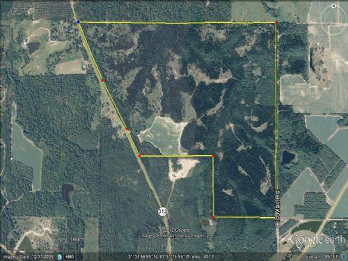Blue Chip Trophy Deer Property : Sylvester : Worth County : Georgia