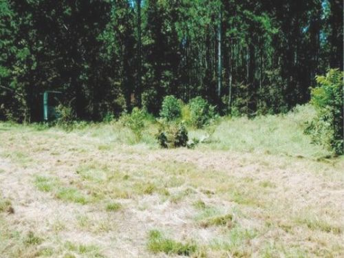 235 Acre Hunters Paradise : Port Gibson : Claiborne County : Mississippi