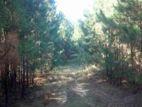369 Acres Of Timberland : West Point : Clay County : Mississippi