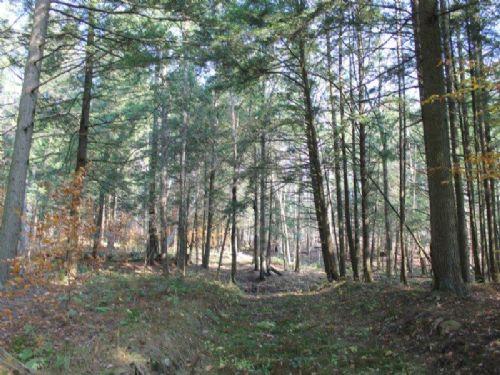 173 Acres Timber Meadows Hunting : Camden : Oneida County : New York