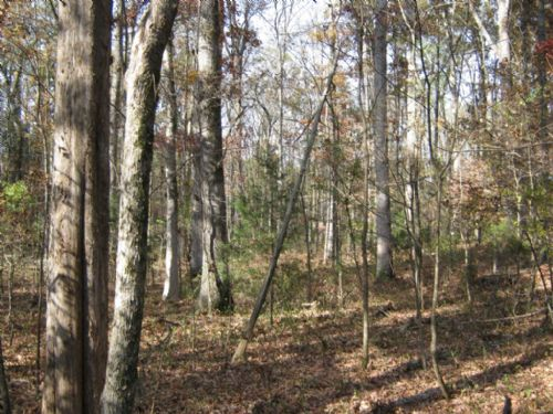 16.30 Acre Wooded Homesite : Chester : South Carolina