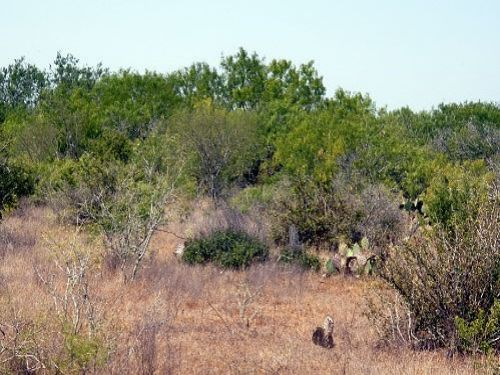 South Tx Brush Country Land For Sale By Owner San
