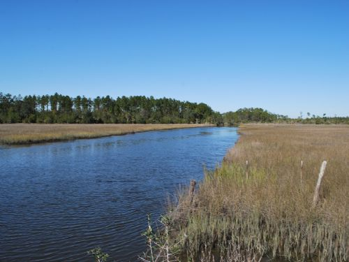 180 Acres With Creek Front & Marsh : Brunswick : Glynn County : Georgia
