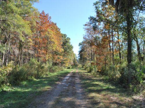 56 Acre Gentleman Farm With Water : Brunswick : Glynn County : Georgia