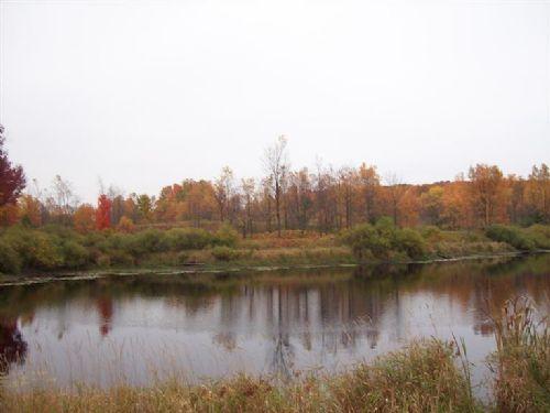 Great 5 Acres Of Hunting/fishing : Tustin : Osceola County : Michigan