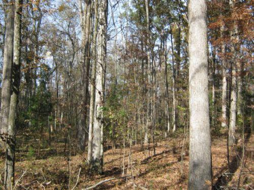 11.47 Acre Homesite Near Interstate : Chester : South Carolina