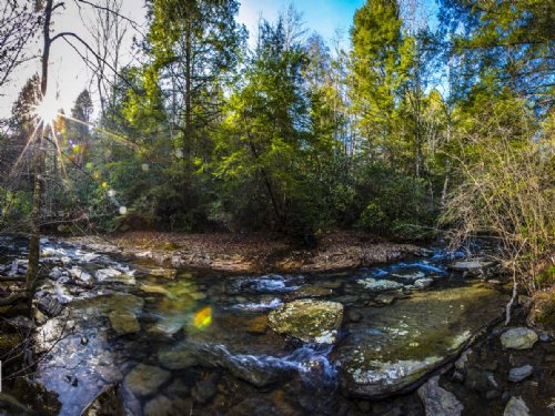 Bledsoe: 81 Acres, Creek Frontage : Spring City : Bledsoe County : Tennessee