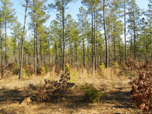 Wooded Escape : Dillwyn : Buckingham County : Virginia