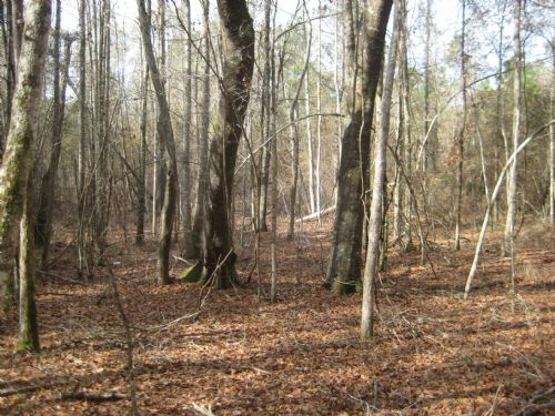 Smith Creek Tract : Wrightsville : Johnson County : Georgia