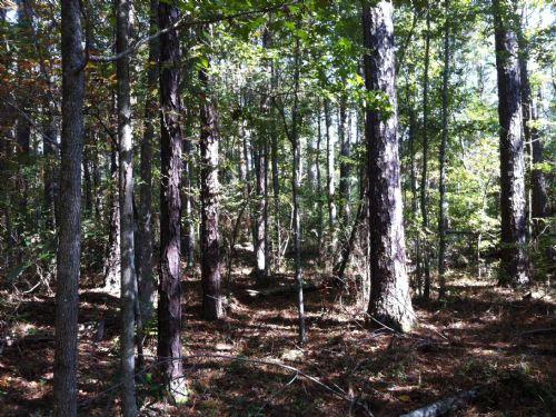 20 +/- Acre Weekend Retreat : Castleberry : Conecuh County : Alabama