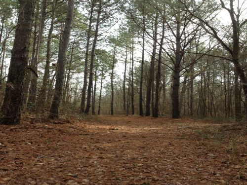 Affordable Hunting Land : Walnut Grove : Leake County : Mississippi