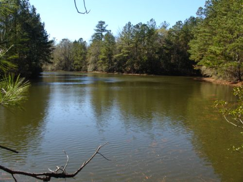 Great Hunting : Andalusia : Covington County : Alabama