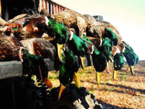 793 Acre Duck Lease : Clarendon : Monroe County : Arkansas