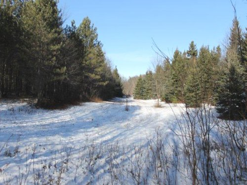 65 Acres Borders State Forest Atv : Montague : Lewis County : New York
