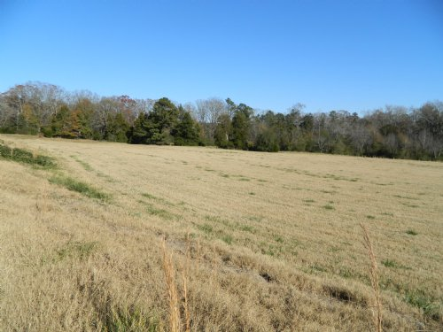 9.672 Mini Farm With Home Site : Comer : Oglethorpe County : Georgia
