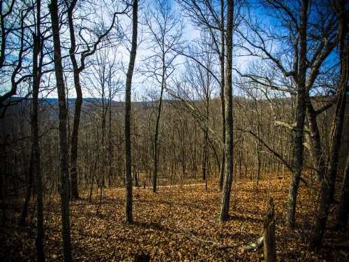 Bledsoe: 71 Acres Of Prime Hunting : Spring City : Bledsoe County : Tennessee