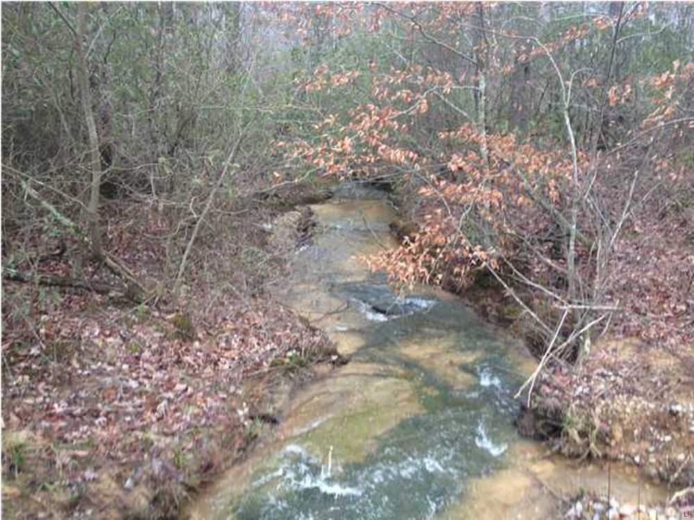 Bank Owned 51.45 +/- Acres $56,595 : Tracy City : Grundy County : Tennessee