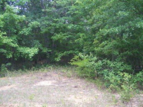 9.25 +/- Acres : Troy : Pike County : Alabama