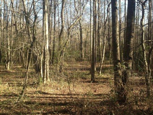 Whitney Tract : Watkinsville : Oconee County : Georgia