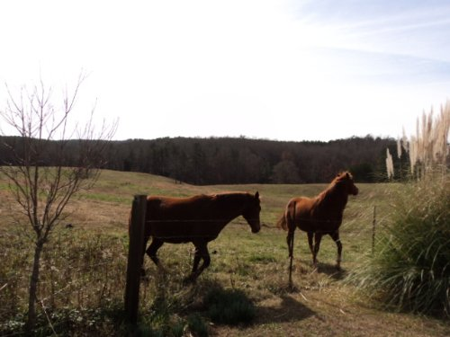 35 Acre Farm And Home Turkey Pen Rd : Cragford : Clay County : Alabama